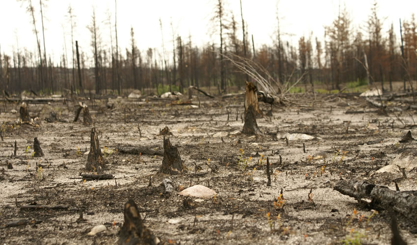 recherche perturbations forêts froides