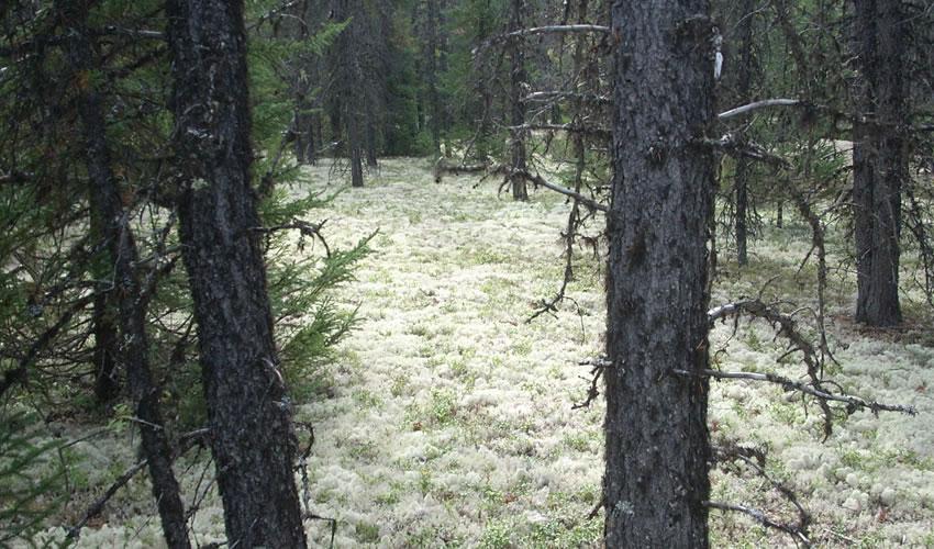 publications forêts froides 2020